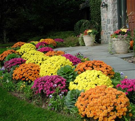 Buy Garden Plants by When To Buy And Plant Garden Mums
