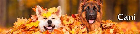 vendita alimenti per animali cani emporio della natura