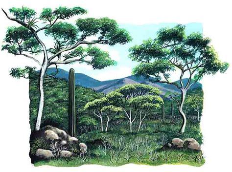 imagenes de animales de la selva garden la selva