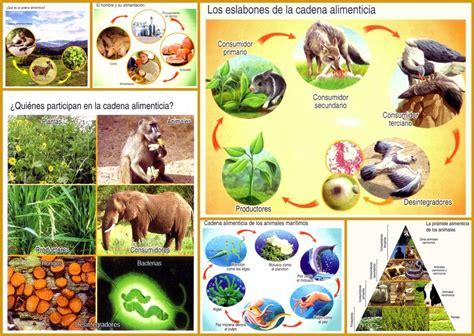 tics 2 darling animales de la selva nivel medio mayor asxlab tics y recursos educativos qu 233 es la cadena