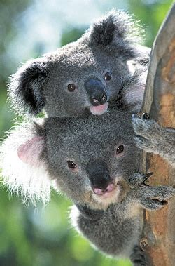 koala hängematte koala capital sicav ya es de las rentables de espa 241 a