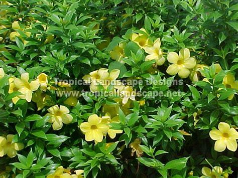 tropical flowering shrubs tropical landscaping designs of ta bay