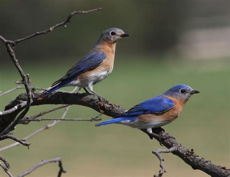bird watching in the blue ridge mountains of virginia