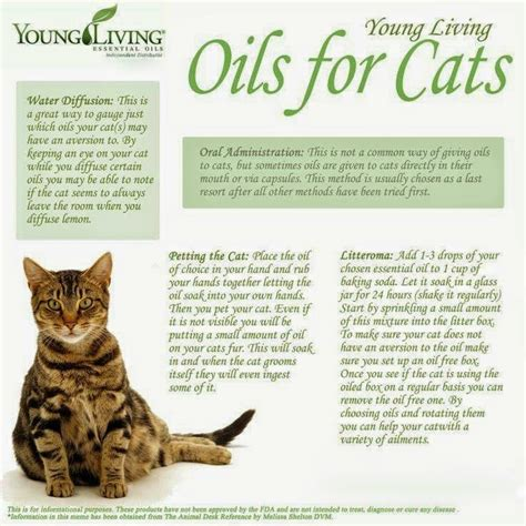healing oils for animals how to use essential oils for cats safely