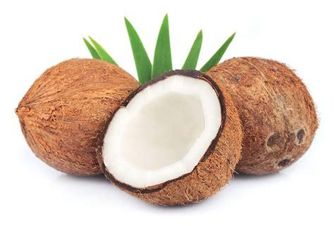 coco image la noix de coco en polyn 233 sie arts et voyages