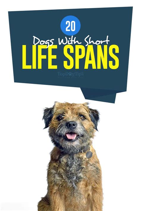 breed with lifespan breeds that lifespan dogs breed sierramichelsslettvet