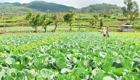 nusabalicom pertanian hortikultura semangati petani