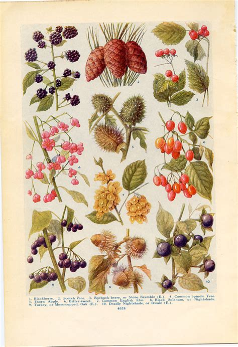 libro the art of botanical vintage botanical prints wild fruits of the countryside