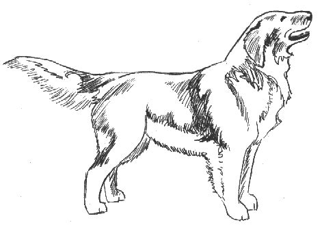 golden retriever sketch golden retriever sketch animals dogs g golden retriever golden retriever sketch png