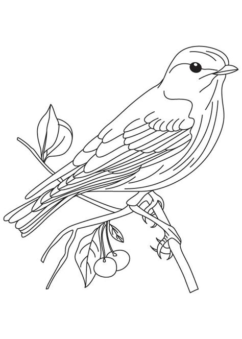 Eastern Goldfinch Coloring Page Sketch Coloring Page