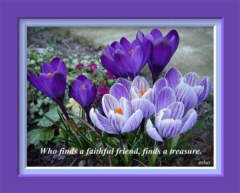 purple flowers quotes  hd wallpaper hdflowerwallpapercom