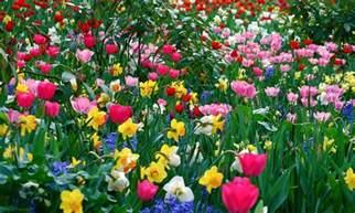 Flower Spring by Spring Flower Wallpaper Backgrounds Wallpaper Cave