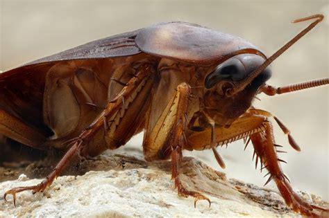 10 imagenes mas asquerosas 10 curiosidades sobre las asquerosas cucarachas marcianos