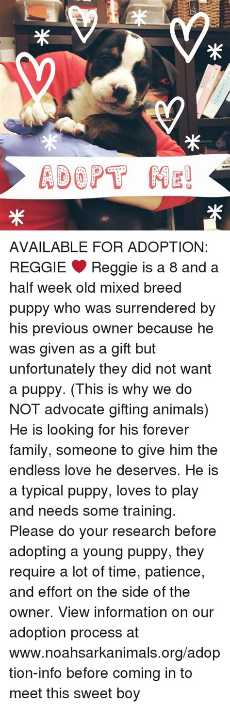 Brangelinas Adoption To Be Processed In Weeks by Adopt He Ng米 米 Available For Adoption Reggie Reggie Is