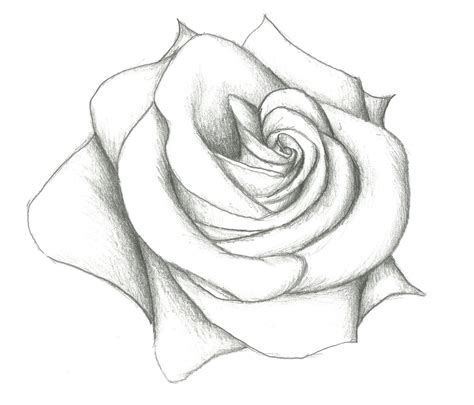 how to draw doodle roses a simple pencil drawing how to draw an open
