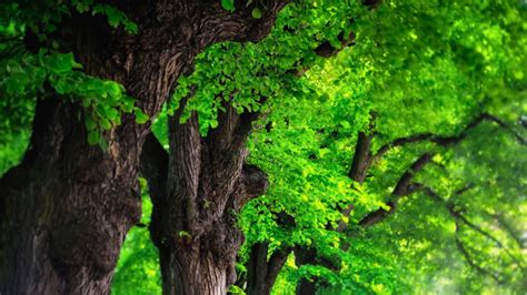 wallpaper green tree weird wallpaper center green trees wallpaper trees