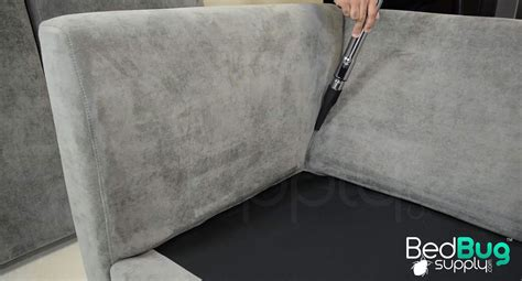 bed bug in couch how to get rid of bed bugs on couches and furniture