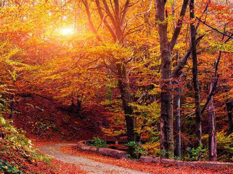 fall autumn autumn serenade the fall music puzzler all songs