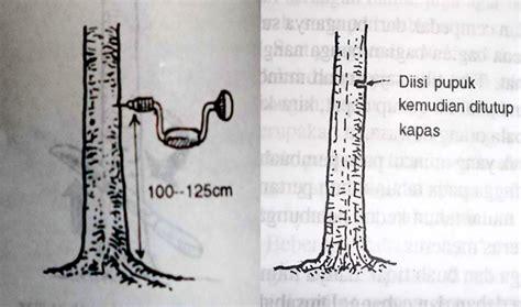 Pupuk Untuk Merangsang Bunga pengeboran batang untuk merangsang pembungaan tanaman