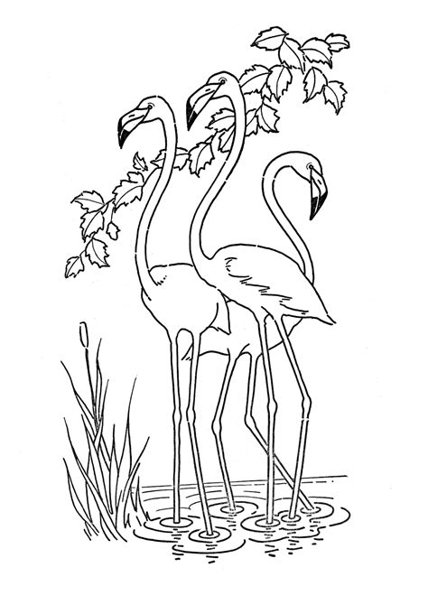 kids printable flamingo coloring page the graphics fairy