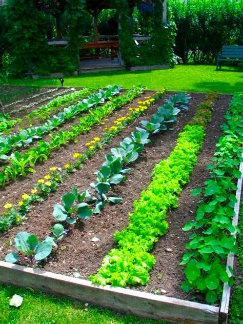 how to plant a vegetable garden in your backyard how to grow your own food for increased security health