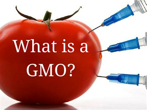 What Is A What Is A Gmo Healthy Hud
