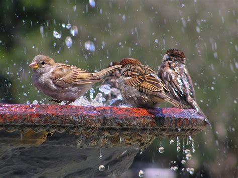 shallow bird bath