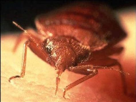 bed bug suit salon infested my house with bed bugs worker says in suit