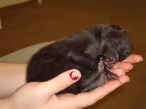 new born puppys identify the newborn puppy history