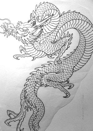 dragon tattoo outline pictures to pin on pinterest