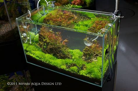 aquascape tank for sale 17 best images about aquascape on pinterest fish tanks