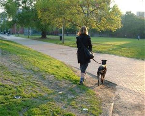 how to a puppy to walk on a leash how to a to walk on a leash k9aggression