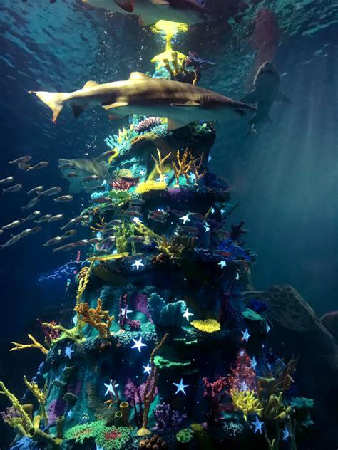adventure insider adventure aquariums official blog