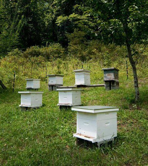 Backyard Beehives by 341 Best Images About Garden Bees On Bumble
