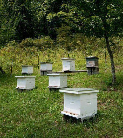 backyard honey bee hive 126 best bee hive bienenbeute images on pinterest bees