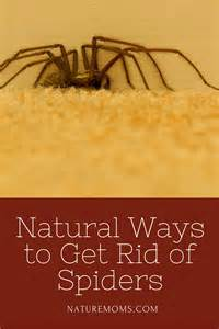 how go get rid of gray on american hair natural ways to get rid of spiders nature moms blog