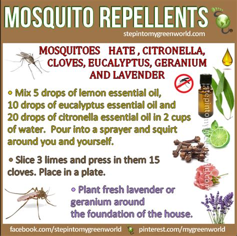 natural mosquito repellents homemade pest control recipes you ll love mosquito spray