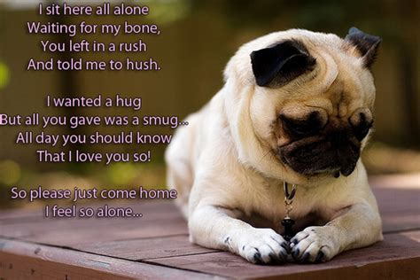 master pug poem talk