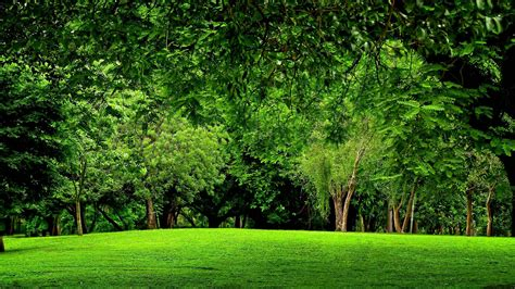 forest green green forest backgrounds wallpaper cave