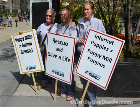 signs of a puppy mill puppy mill awareness day by the puppy mill project