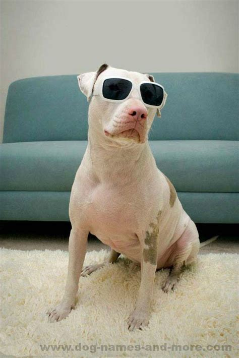 strong names for pitbulls boxer puppy forum strong pitbull names how to treat