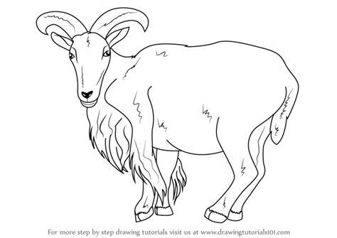 how to a sheep learn how to draw a barbary sheep animals step by step drawing tutorials