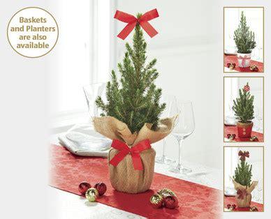 mini christmas trees aldi ireland specials archive