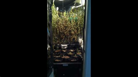 Closet Grow Room Setup by Small Room Design Best Small Closet Grow Room Ideas