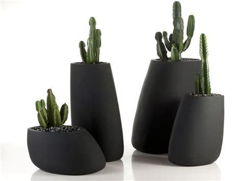 vasi decorativi da interno piante vaso piante da terrazzo migliori piante da vaso