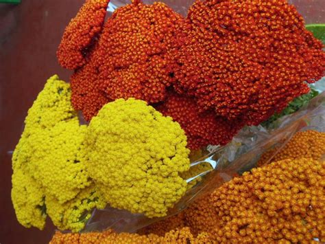 fiori freschi fiori freschi orlandi