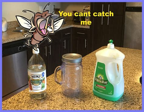 how to get rid of gnats how to get rid of fruit flies