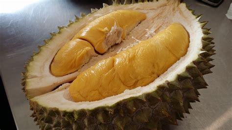 Bibit Durian Raja Musang gambar 5 tips mengenalpasti buah durian musang king rajah