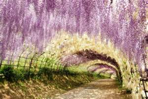 Wisteria Flower Tunnel by 27 Breathtaking Views To Behold Of Mother Nature S