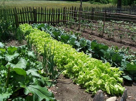 Garden Of Food Begin Living Green By An And Organic Garden